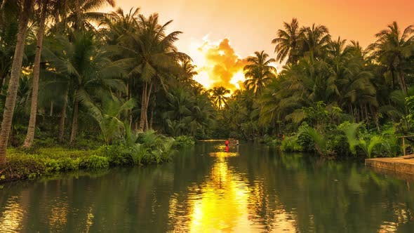 Cover Image for River at the Palm Trees Tropical Jungle at the Sunset Time