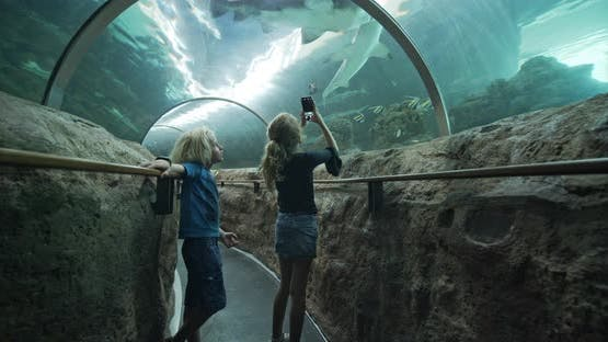 Girl Using Smartphone To Film Sharks In Aquarium