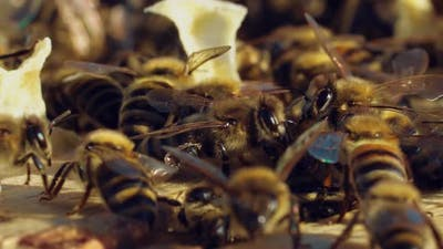 Bees Walk Between Wooden Frames in a Hive in a Warm Weather