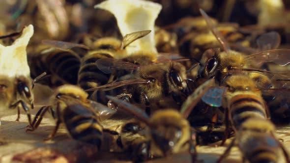 Bienen wandern zwischen Holzrahmen in einem Bienenstock bei warmem Wetter