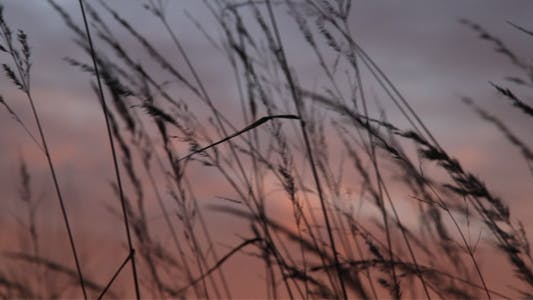 Thumbnail for Grass Swaying with the Wind