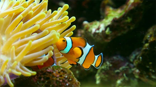 Cover Image for Clown fish.