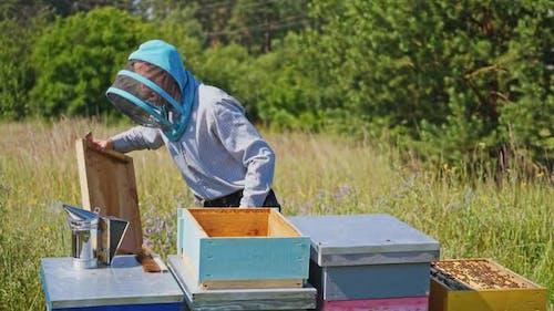 Bienenmeister auf Imkerei