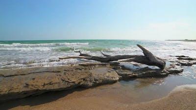 Dried Tree Log on the Beach