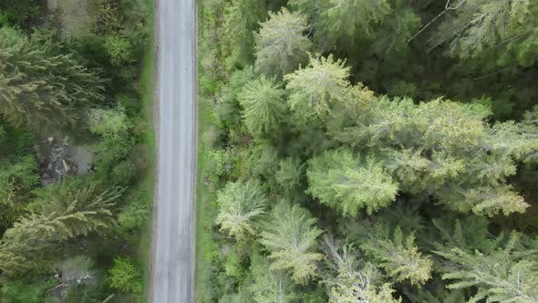 Ukraine, Carpathian Mountains: Road in the Mountains. Aerial, Gray, Flat