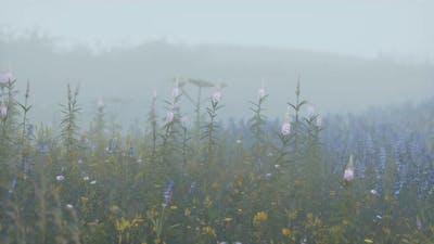 Wild Field Flowers in Deep Fog