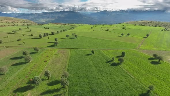 Amazing Wonderful Sparse Trees and Green Fields on Plateau