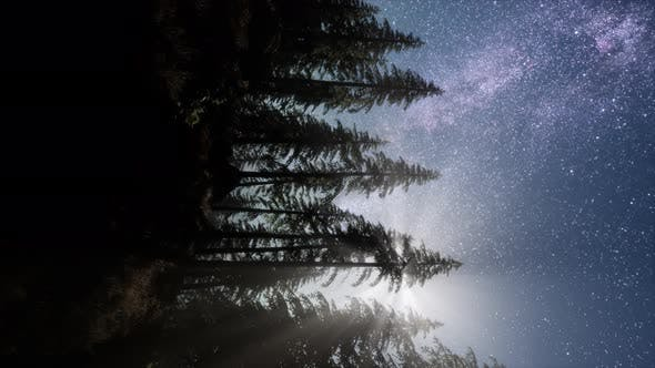 Thumbnail for Milky Way Stars with Moonlight Above Pine Trees Forest