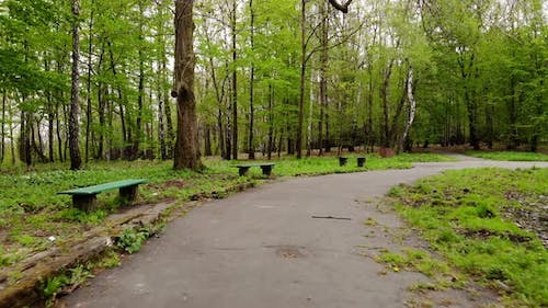 Park alley in early spring.