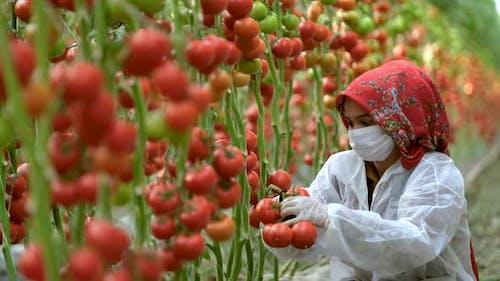 Landwirte arbeiten in Gewächshäusern