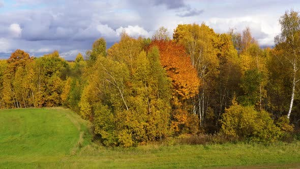 Thumbnail for Crowns of Trees with Yellow Foliage. Deciduous Forest in the Fall. Aerial View of the Forest Under