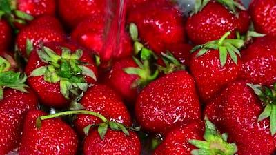 Washing red ripe fresh strawberry berries with water