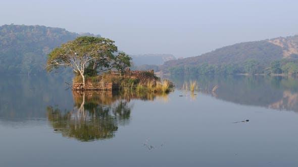 Thumbnail for Jungle India. Ranthambore National Park Rajasthan India