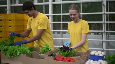 Volunteers Pack Humanitarian Help Food for Donation