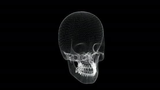 Skull Hologram