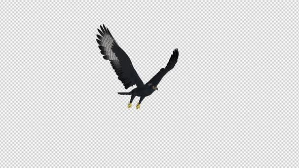 Thumbnail for African Eagle - 4K Flying Loop - Front Side Angle