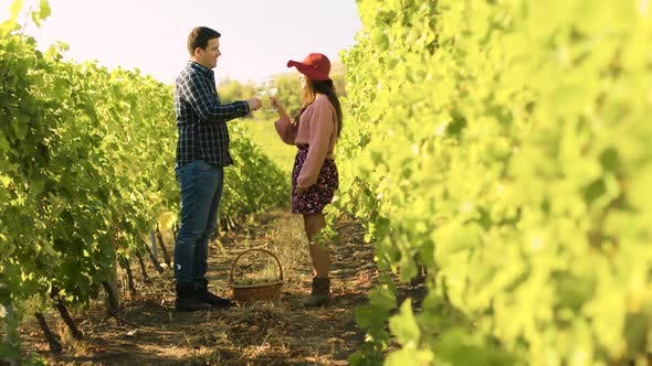 Caucasian Couple Clinking Glasses in a Vineyard