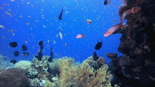 Tropische Fische Korallen Meeresriff
