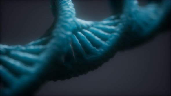 Loopable Structure of the DNA Double Helix Animation