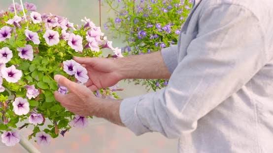 Thumbnail for Confident Male Gardener Examining Potted Flower Plant