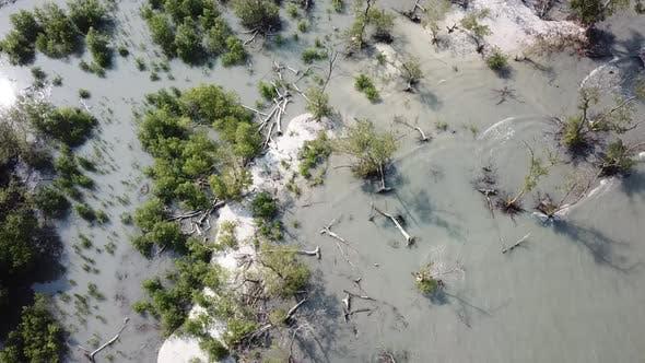 Thumbnail for White sand and mangrove tree at Tanjung Piandang