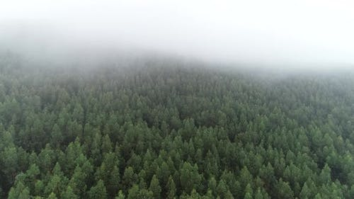 Mist Above Forest