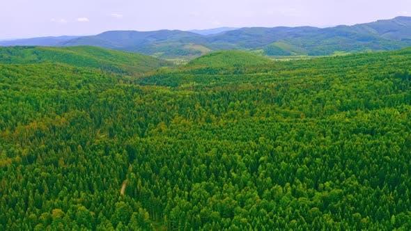Aerial View on Greenwood