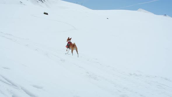 Thumbnail for Cute Adorable Brown Puppy Runs in Snow Wit Harness
