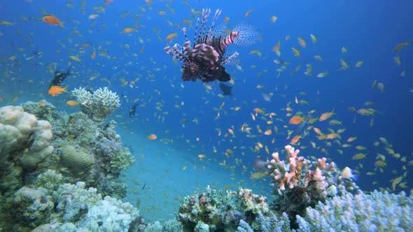 Cover Image for Underwater Colorful Scenery Lionfish