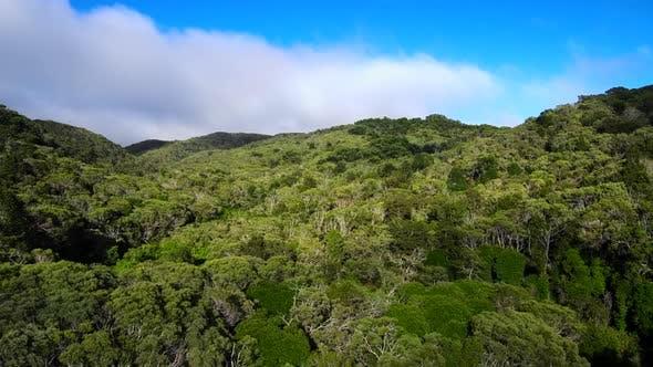 Flying backwards above Jungle at Hawaiian epic Waimea Canyon