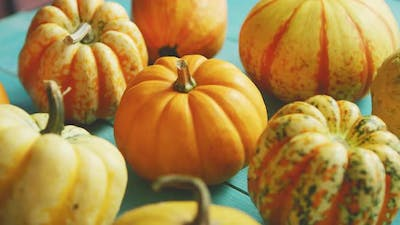 Pumpkins Laid in Row on Table