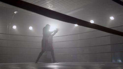 Porträt von Boxer im Ring