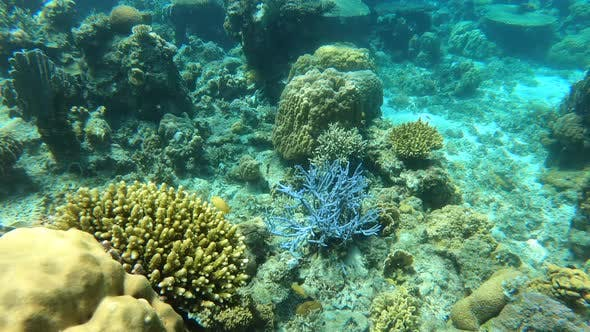 Thumbnail for Wonderful and Beautiful Underwater World with Corals and Tropical Fish