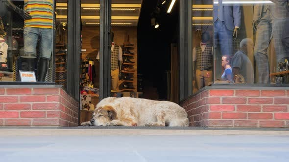 Thumbnail for Busy City and Animal on Side. City Life on Busy Working Day. Street Dog Sleeping on the Sidewalk in