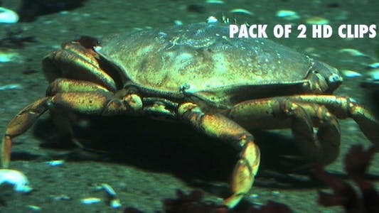 Thumbnail for Hunting Crab - Pack 2