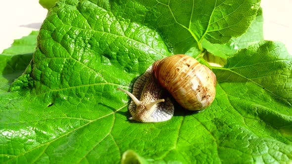 Thumbnail for Shooting of Garden Snail