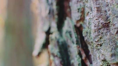 Macro Shot of of Tree Bark