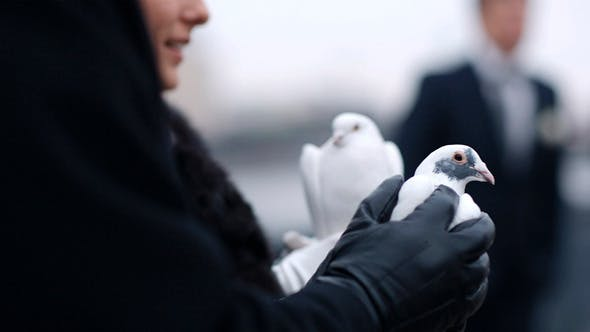 Thumbnail for Woman Holding A Dove in Her Hands