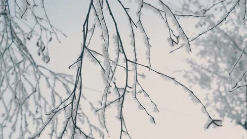 Fresh Frost on Thin Branches Against Light Morning Sky
