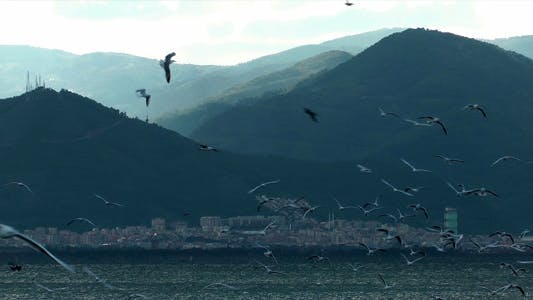 Thumbnail for Seagulls 1