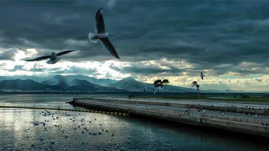Thumbnail for Seagulls 2