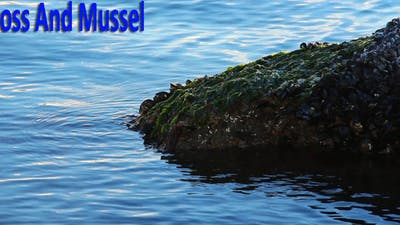 Moss And Mussel