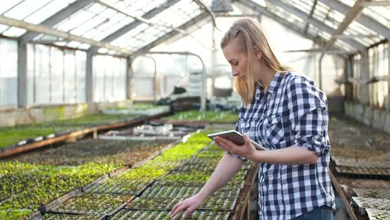 Thumbnail for Female Gardener Usingcalculator in Greenhouse Agriculture Business, Agribusiness,