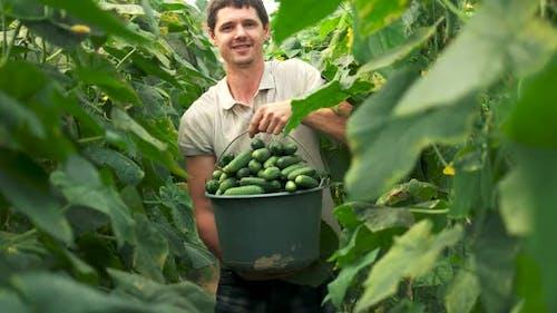 Happy Farmer Holding Bucket with Fresh Cucumbers
