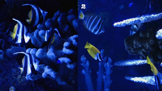 Thumbnail for Aquarium