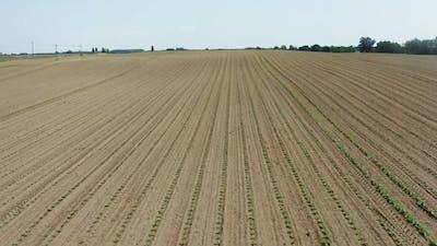 Seedling Countryside