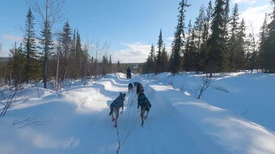 POV on a Dog Sled on a Snowy Road in Sweden