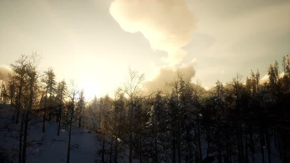 Thumbnail for Winter Landscape on a Sunset