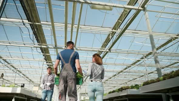 Cover Image for Farmers in a Greenhouse with Modern Technology