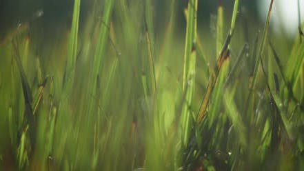 Green grass on a blurry background